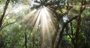 sun-rays-through-green-trees